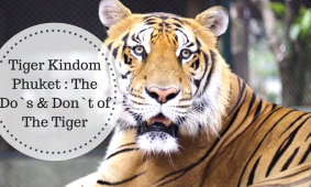 Tiger Kingdom Phuket, The Do`s & Don`t of The Tiger